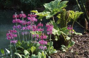 Thenford Gardens